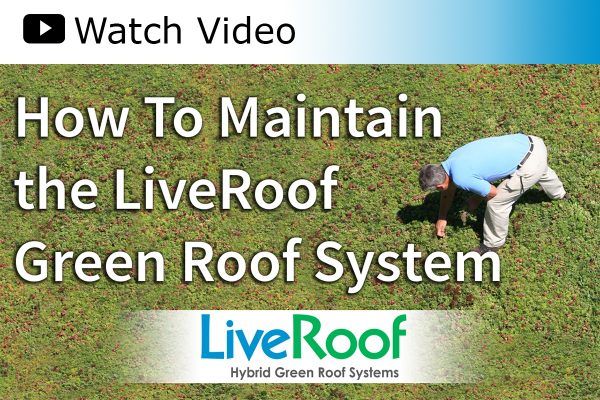 A video guide on how to properly maintain your LiveRoof.