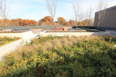 Padnos Sculpture Garden green roof at the time of installation in Fall 2018.
