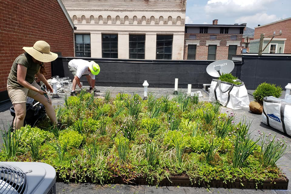Workers installing green roof modules at Green City Resources.